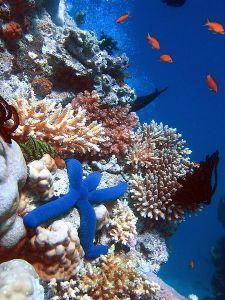 生物多样性危机入门